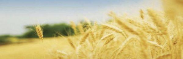 Поддержка фермерских хозяйств Cover Image