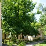 shkola15 Profile Picture