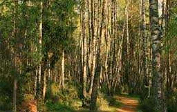 Минприроды России введены новые порядки освоения лесов - последние новости