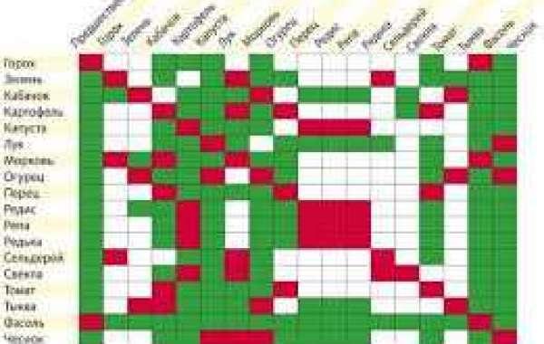 Самое главное, что можно сажать после чеснока и лука на следующий год - таблица