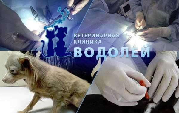 «Водолей» — ветеринарная клиника в Москве