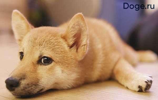 Где найти названия, описание и фото всех пород собак